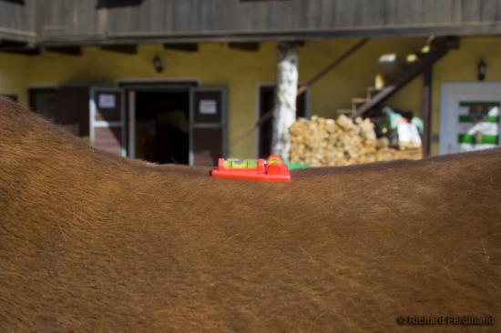 Ermitteln des tiefsten Punktes des Pferderückens